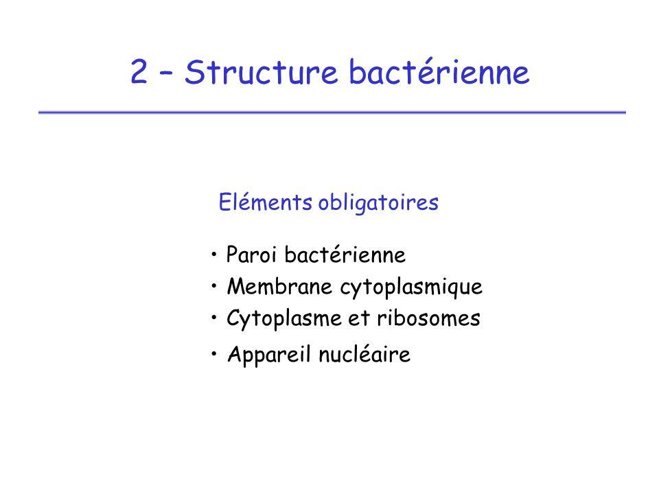 2 – Structure bactérienne Paroi bactérienne Membrane cytoplasmique Cytoplasme et ribosomes Appareil nucléaire Eléments obligatoires