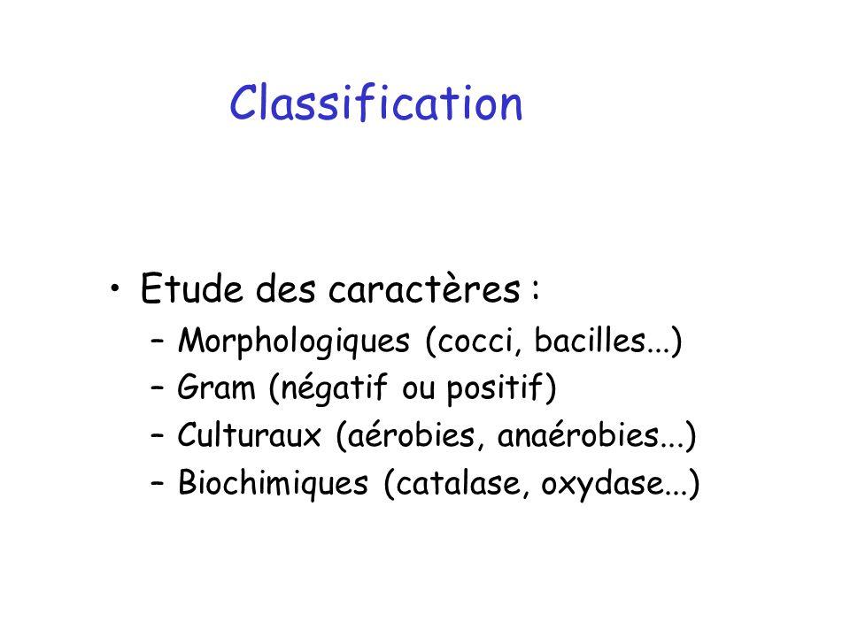Etude des caractères : –Morphologiques (cocci, bacilles...) –Gram (négatif ou positif) –Culturaux (aérobies, anaérobies...) –Biochimiques (catalase, o