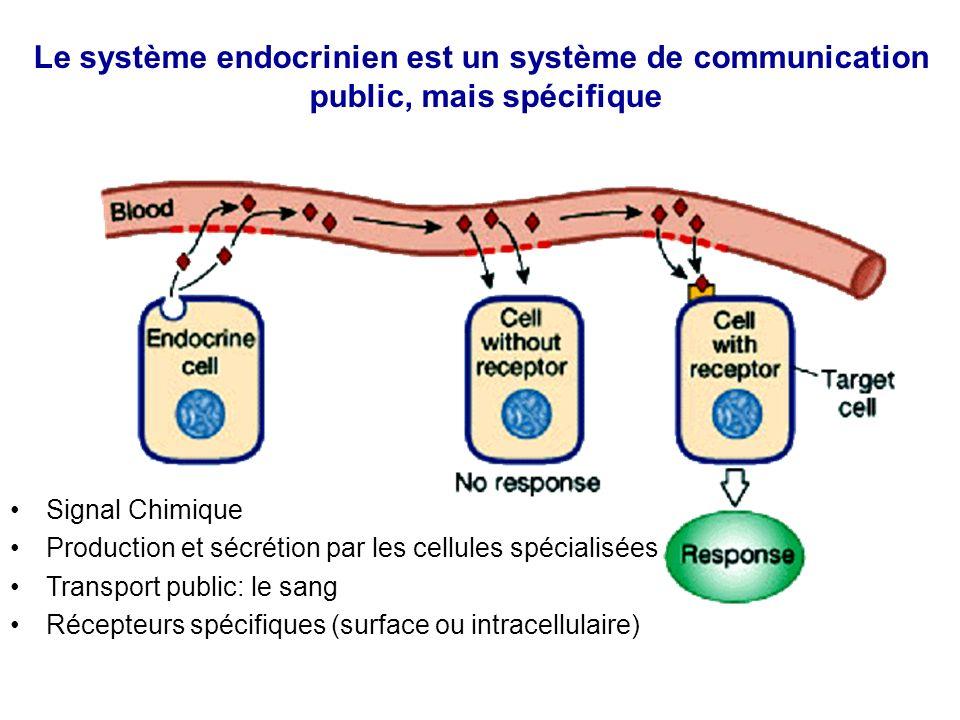 Le système endocrinien est un système de communication public, mais spécifique Signal Chimique Production et sécrétion par les cellules spécialisées T