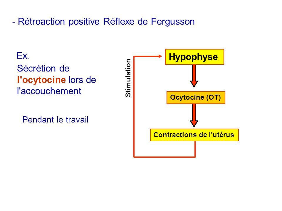 - Rétroaction positive Réflexe de Fergusson Stimulation Ex. Sécrétion de l'ocytocine lors de l'accouchement Contractions de l'utérus Hypophyse Ocytoci