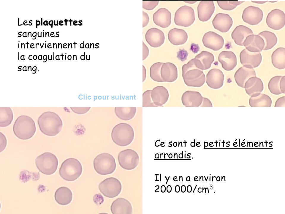 plaquettes Les plaquettes sanguines interviennent dans la coagulation du sang. Ce sont de petits éléments arrondis. Il y en a environ 200 000/cm 3. Cl