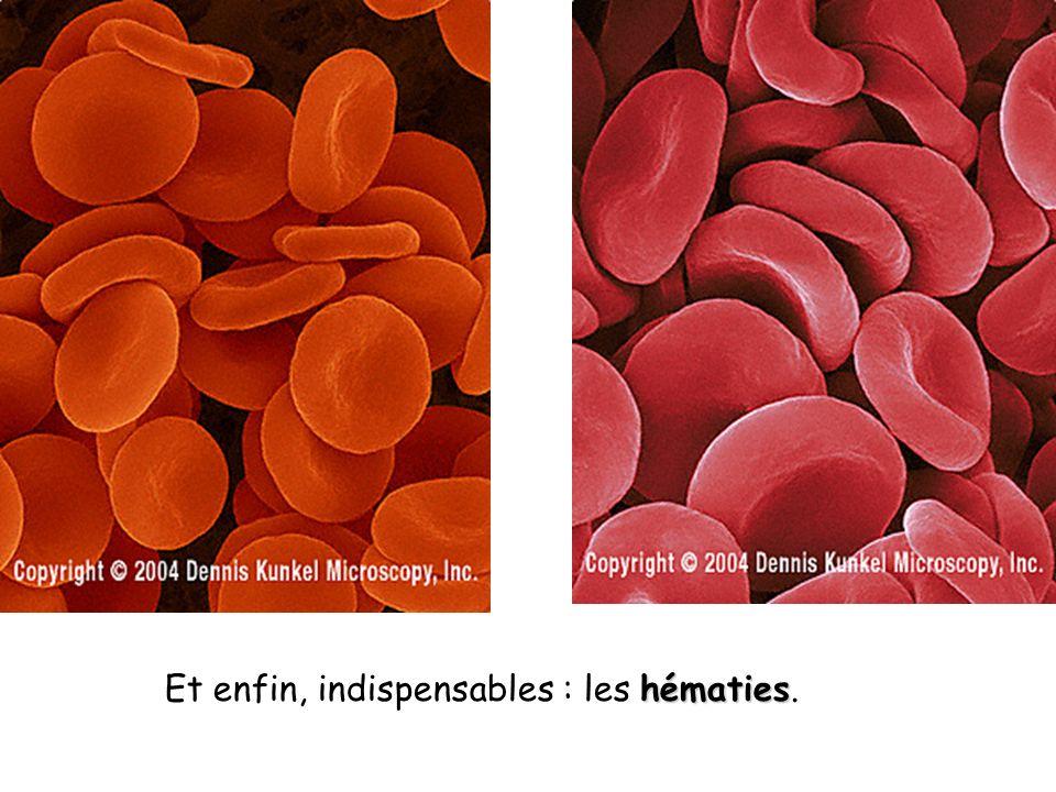 hématies Et enfin, indispensables : les hématies.