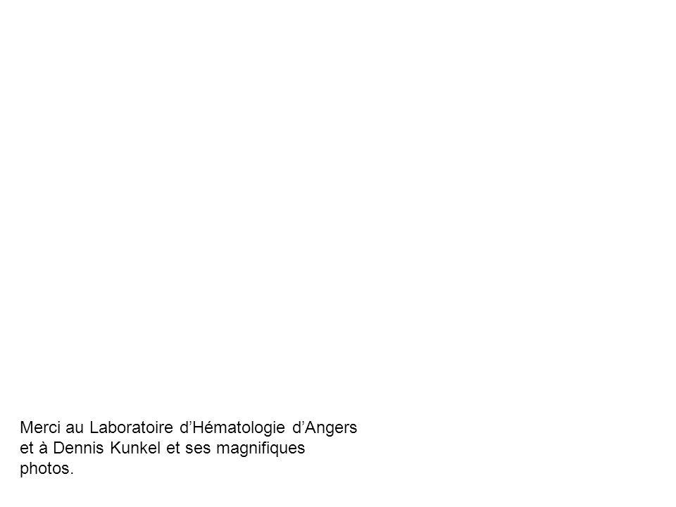 Merci au Laboratoire dHématologie dAngers et à Dennis Kunkel et ses magnifiques photos.
