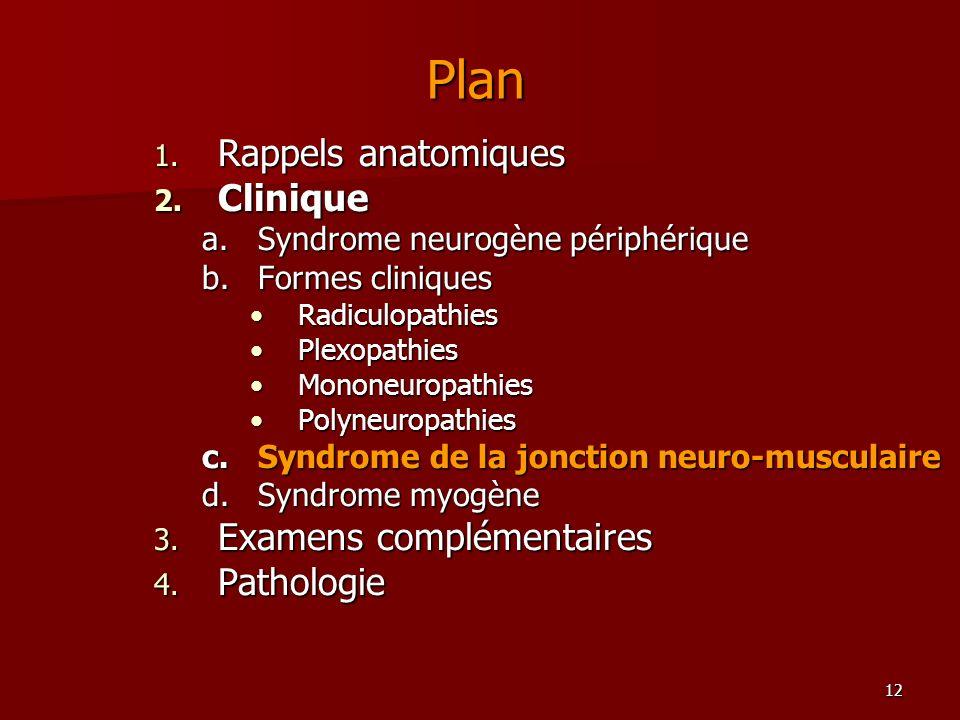 12 Plan 1. Rappels anatomiques 2. Clinique a.Syndrome neurogène périphérique b.Formes cliniques RadiculopathiesRadiculopathies PlexopathiesPlexopathie