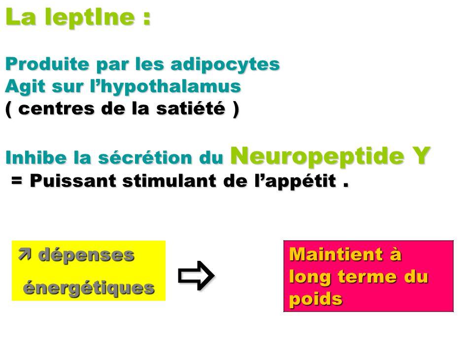 La leptIne : Produite par les adipocytes Agit sur lhypothalamus ( centres de la satiété ) Inhibe la sécrétion du Neuropeptide Y = Puissant stimulant d