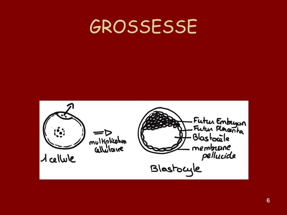 6 GROSSESSE