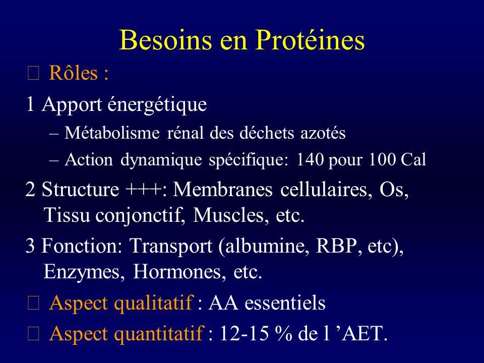 Besoins en Protéines  Rôles : 1 Apport énergétique –Métabolisme rénal des déchets azotés –Action dynamique spécifique: 140 pour 100 Cal 2 Structure +