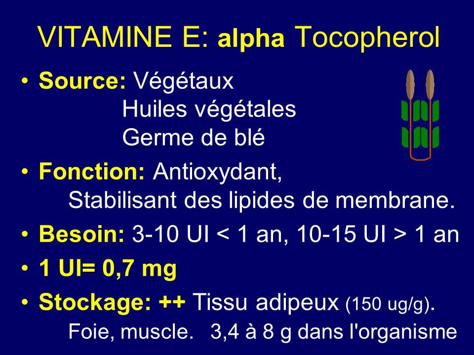 VITAMINE E: alpha Tocopherol Source: Végétaux Huiles végétales Germe de blé Fonction: Antioxydant, Stabilisant des lipides de membrane. Besoin: 3-10 U