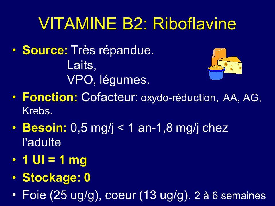 VITAMINE B2: Riboflavine Source: Très répandue. Laits, VPO, légumes. Fonction: Cofacteur: oxydo-réduction, AA, AG, Krebs. Besoin: 0,5 mg/j < 1 an-1,8