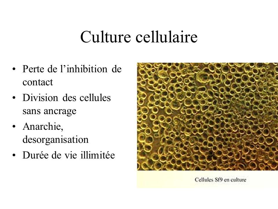 Culture cellulaire Perte de linhibition de contact Division des cellules sans ancrage Anarchie, desorganisation Durée de vie illimitée