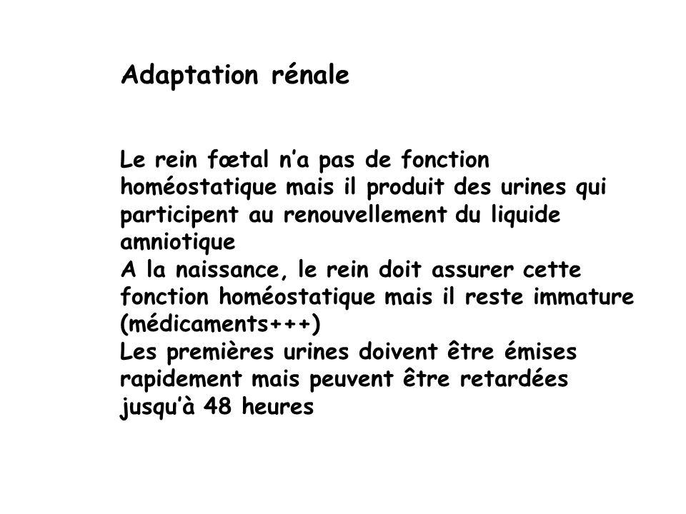 Adaptation rénale Le rein fœtal na pas de fonction homéostatique mais il produit des urines qui participent au renouvellement du liquide amniotique A