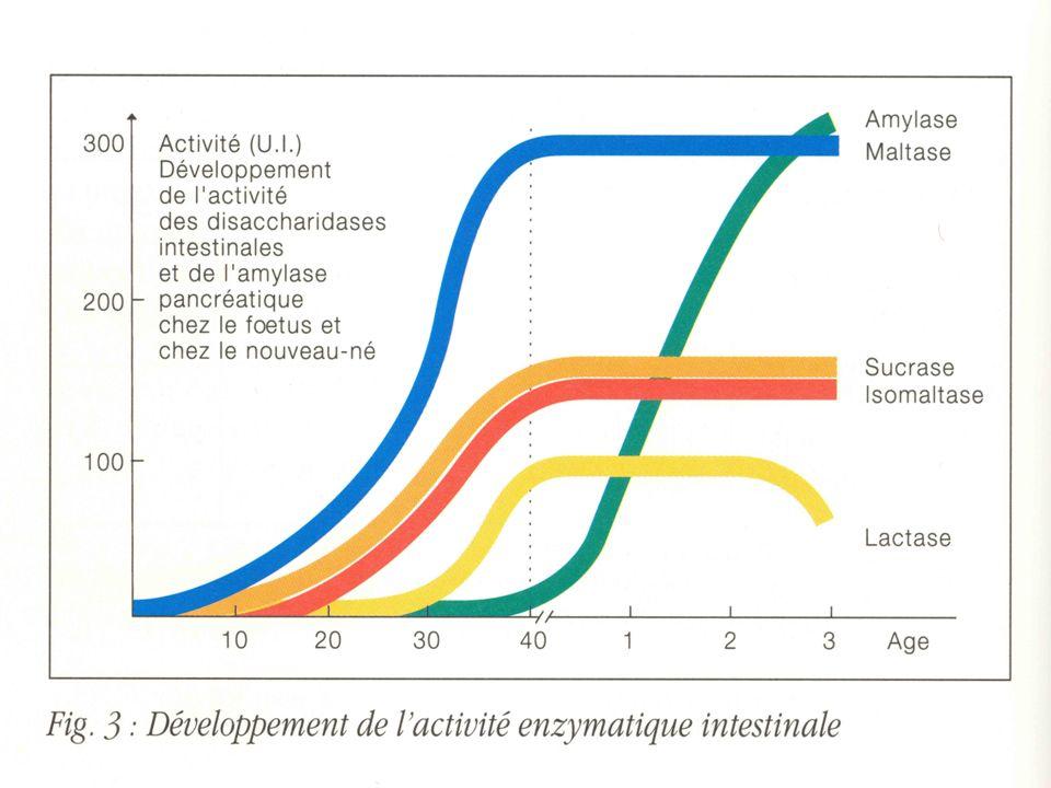 Développement des fonctions de digestion et d absorption Protides: Enzymes protéolytiques: - gastriques (HCl et pepsine) immatures ( caséine) - pancréatiques (trypsine) très immatures - surtout intestinales.