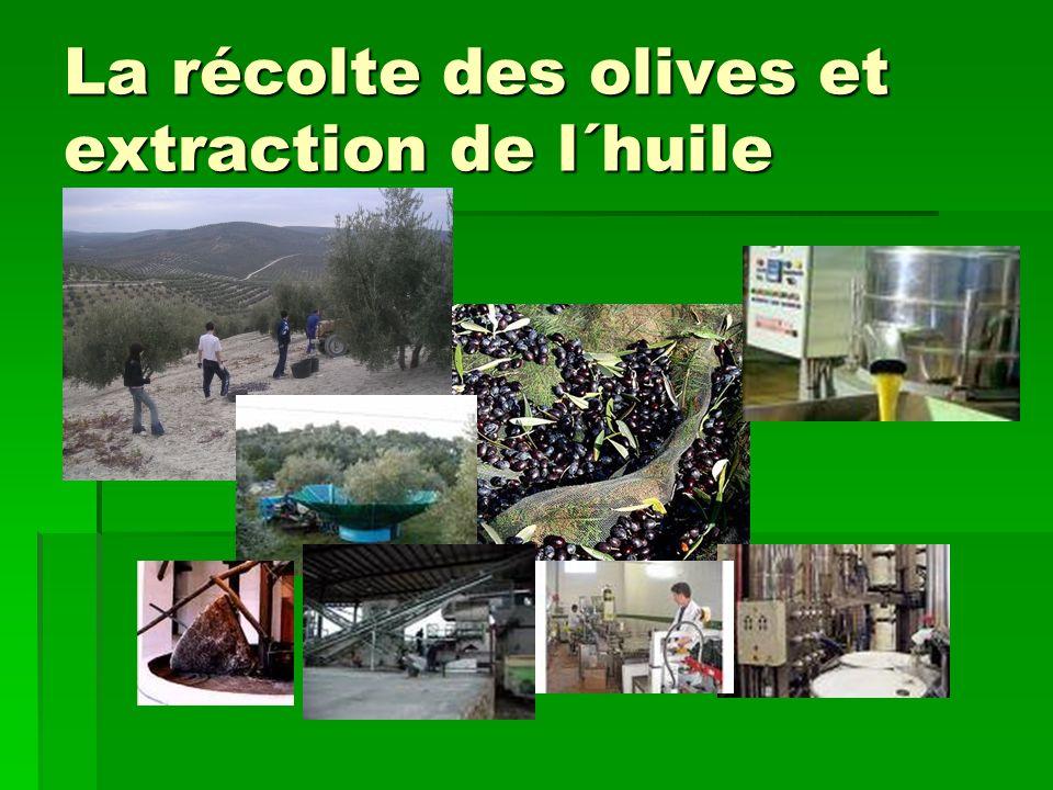 La récolte des olives et extraction de l´huile