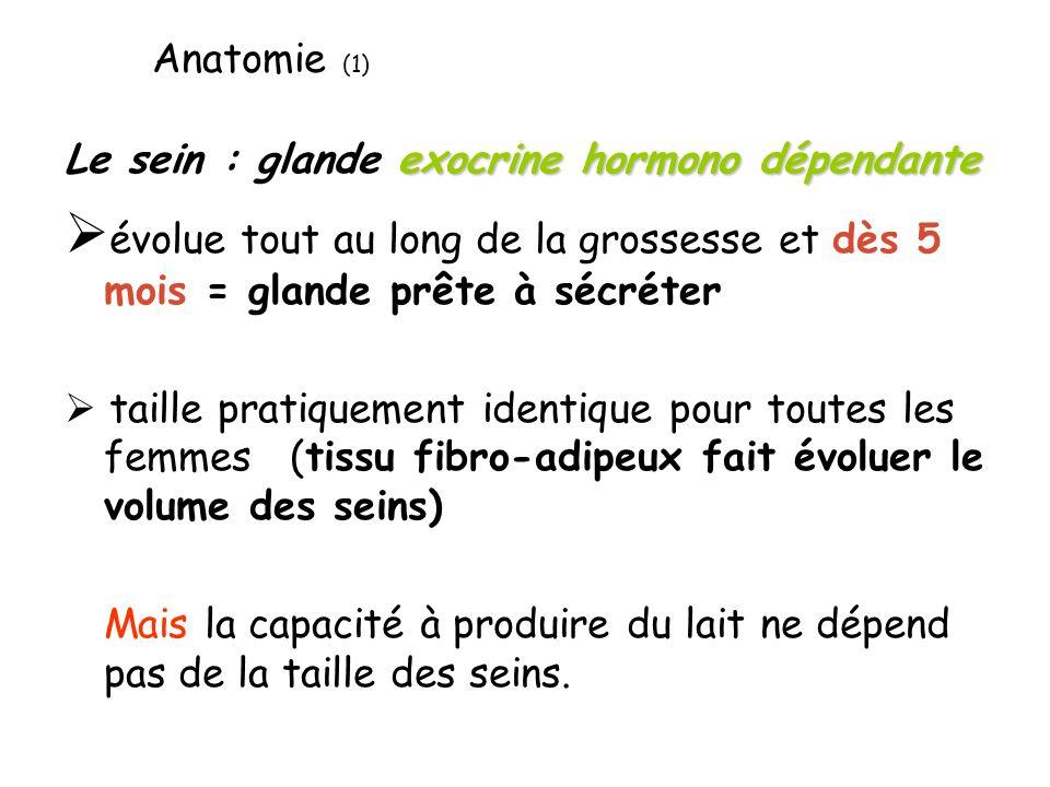 exocrine hormono dépendante Le sein : glande exocrine hormono dépendante évolue tout au long de la grossesse et dès 5 mois = glande prête à sécréter t