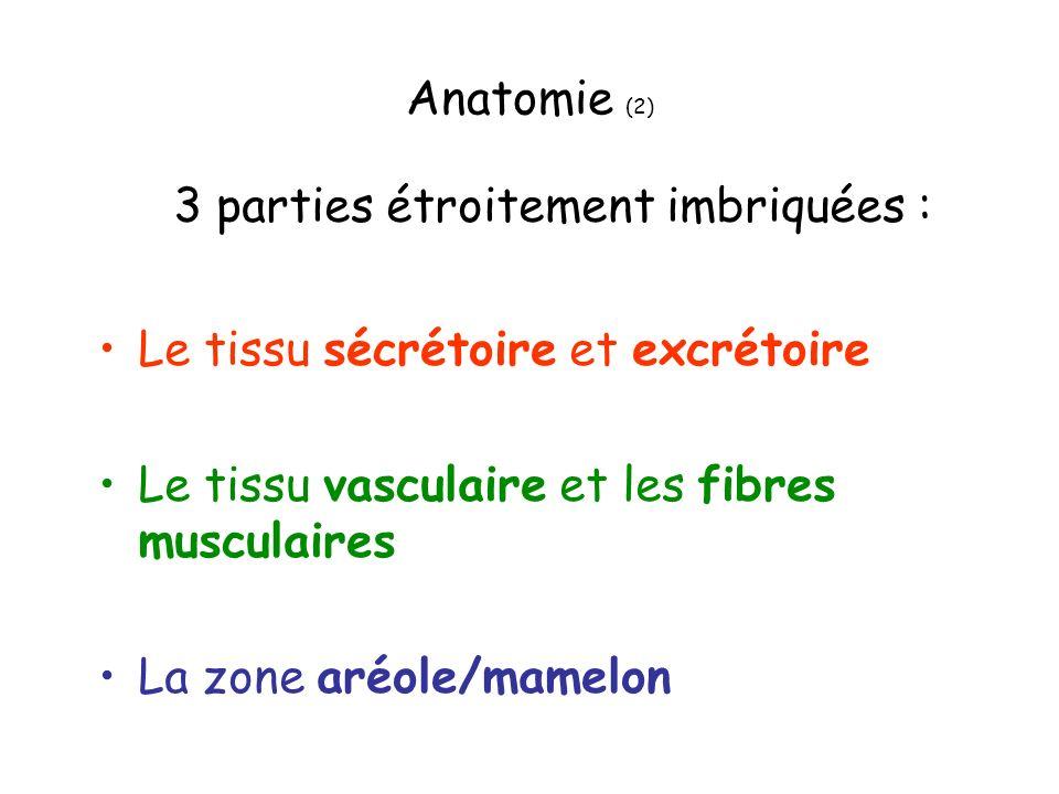 Anatomie (2) Le tissu sécrétoire et excrétoire Le tissu vasculaire et les fibres musculaires La zone aréole/mamelon 3 parties étroitement imbriquées :