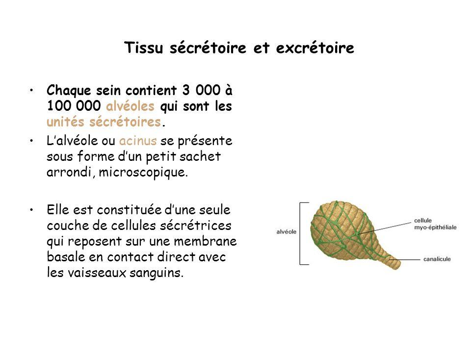 Tissu sécrétoire et excrétoire Chaque sein contient 3 000 à 100 000 alvéoles qui sont les unités sécrétoires.