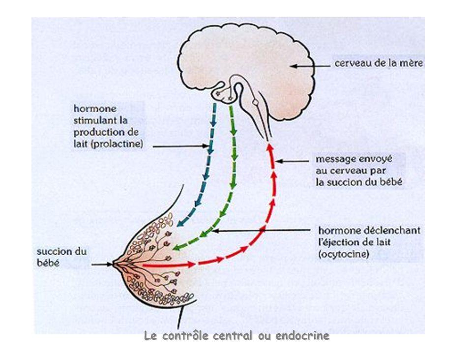 Le contrôle central ou endocrine
