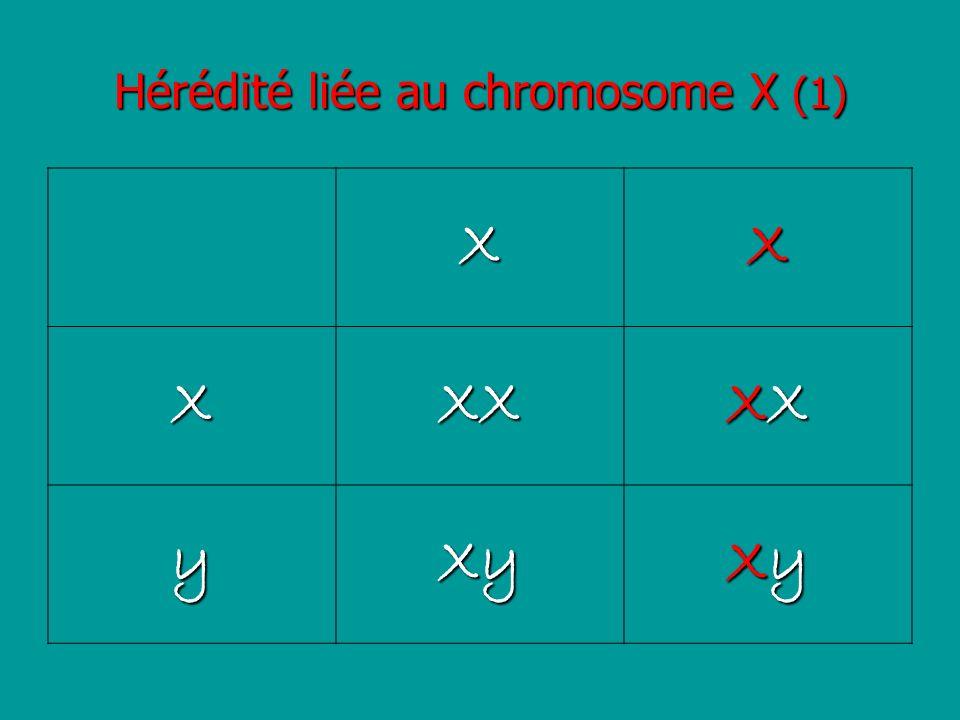 Hérédité liée au chromosome X (1) XX XXX XXXXXXXX yXy XyXyXyXy