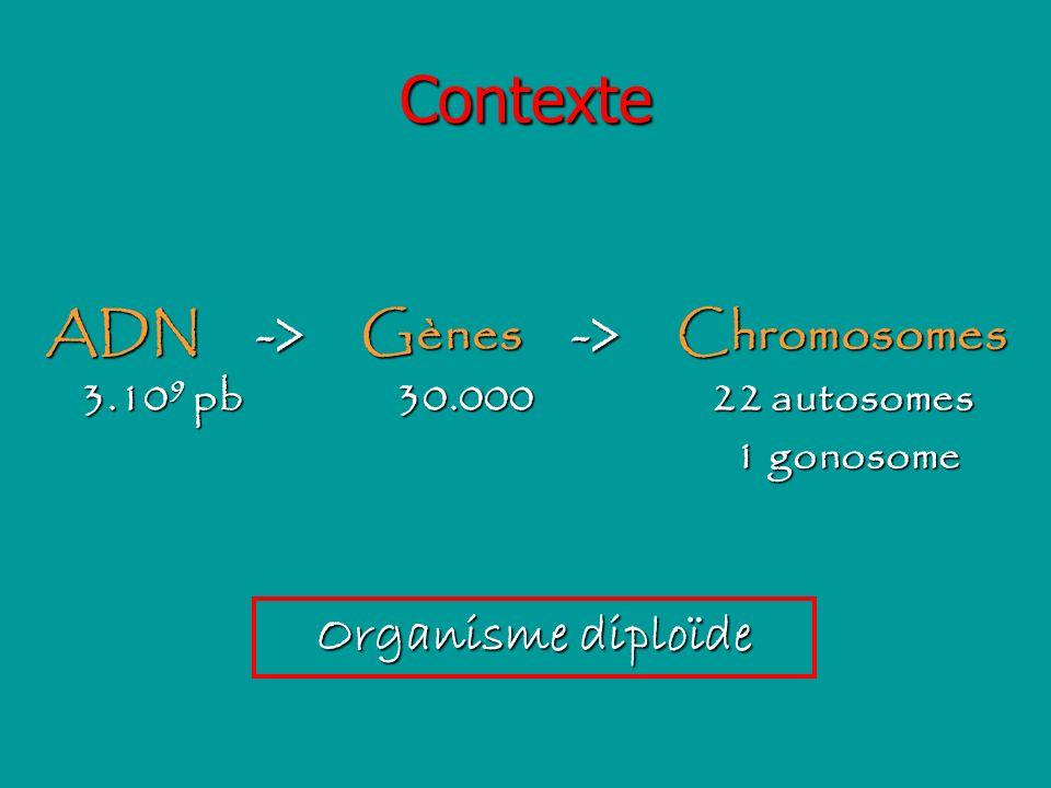 Contexte ADN->Gènes->Chromosomes 3.10 9 pb30.00022 autosomes 1 gonosome 1 gonosome Organisme diploïde