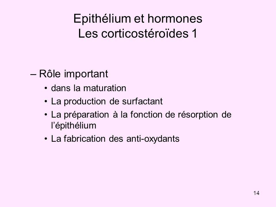 14 Epithélium et hormones Les corticostéroïdes 1 –Rôle important dans la maturation La production de surfactant La préparation à la fonction de résorp