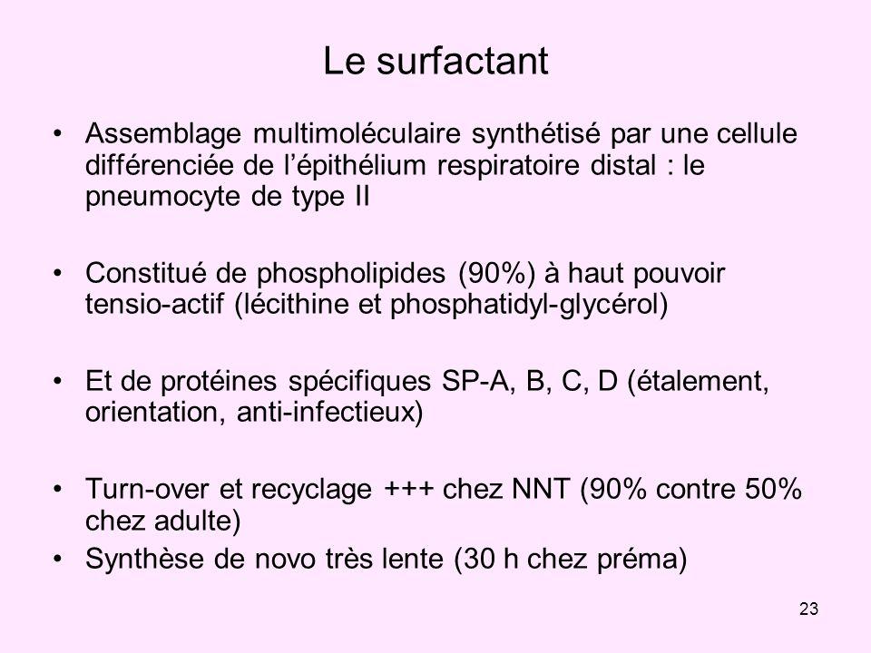 23 Le surfactant Assemblage multimoléculaire synthétisé par une cellule différenciée de lépithélium respiratoire distal : le pneumocyte de type II Con