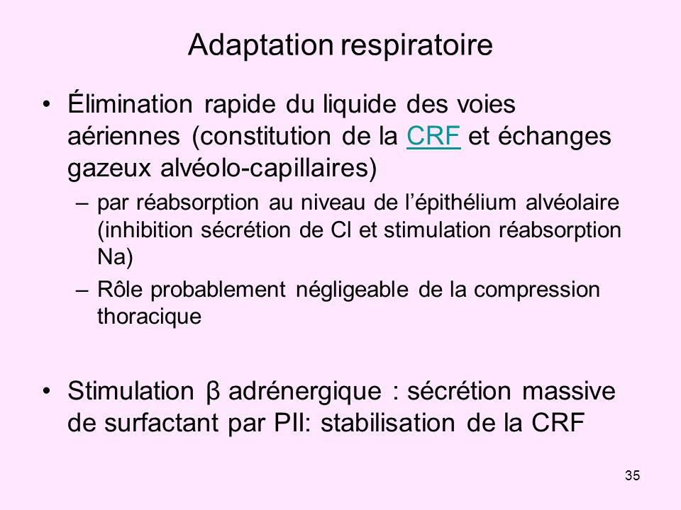 35 Adaptation respiratoire Élimination rapide du liquide des voies aériennes (constitution de la CRF et échanges gazeux alvéolo-capillaires)CRF –par r