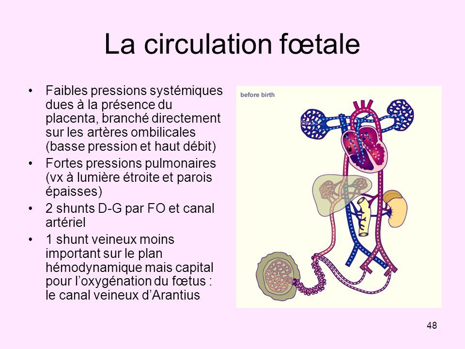 48 La circulation fœtale Faibles pressions systémiques dues à la présence du placenta, branché directement sur les artères ombilicales (basse pression