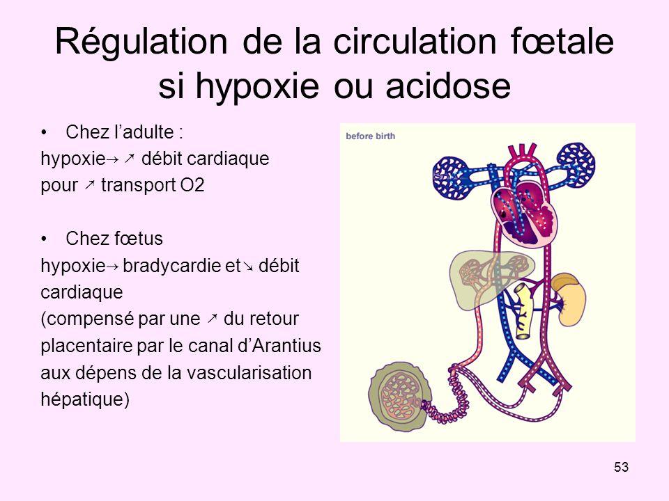 53 Régulation de la circulation fœtale si hypoxie ou acidose Chez ladulte : hypoxie débit cardiaque pour transport O2 Chez fœtus hypoxie bradycardie e