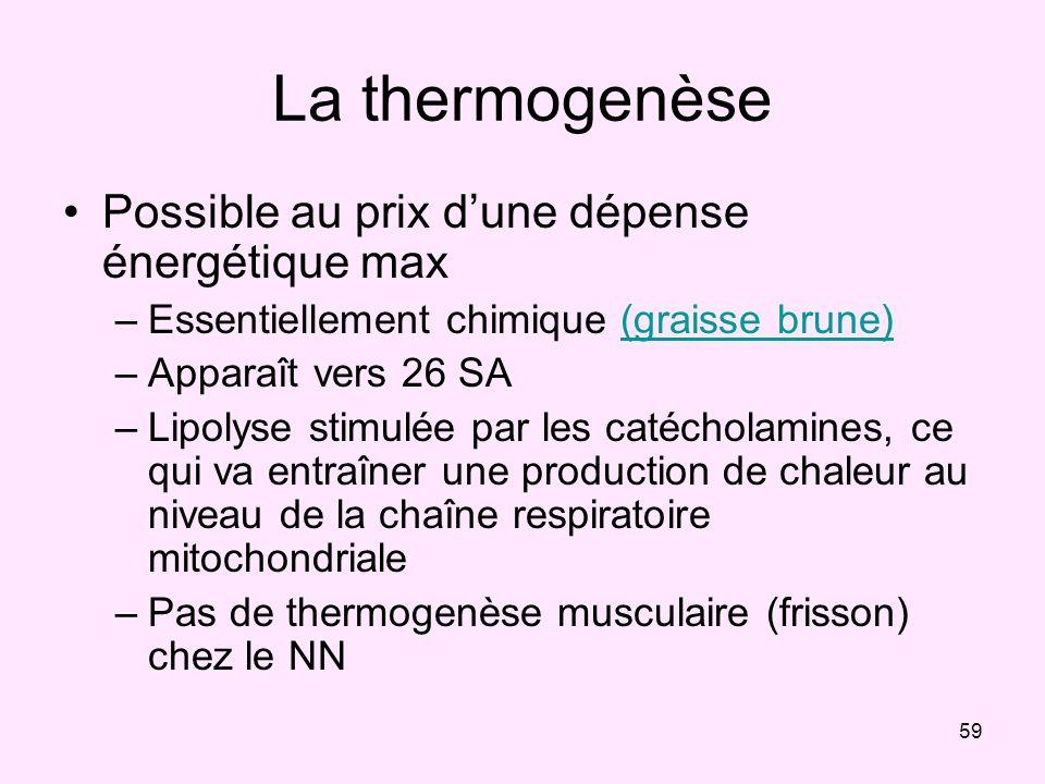 59 La thermogenèse Possible au prix dune dépense énergétique max –Essentiellement chimique (graisse brune)(graisse brune) –Apparaît vers 26 SA –Lipoly