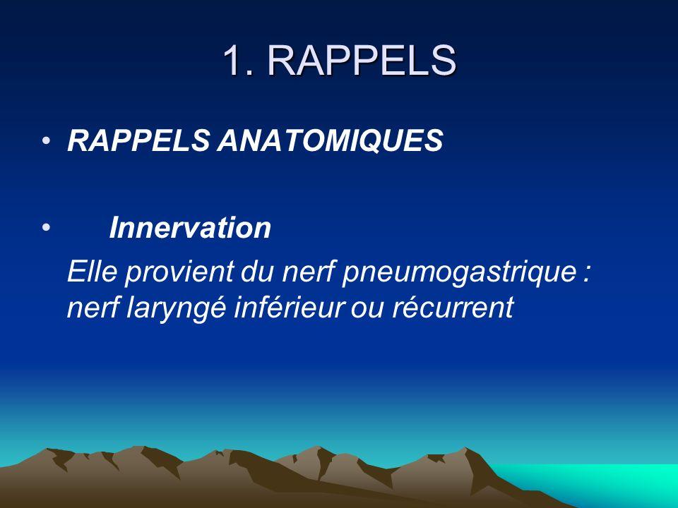 1. RAPPELS RAPPELS ANATOMIQUES Innervation Elle provient du nerf pneumogastrique : nerf laryngé inférieur ou récurrent
