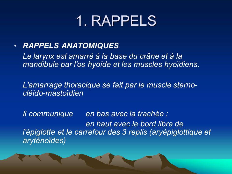 1. RAPPELS RAPPELS ANATOMIQUES Le larynx est amarré à la base du crâne et à la mandibule par los hyoïde et les muscles hyoïdiens. Lamarrage thoracique