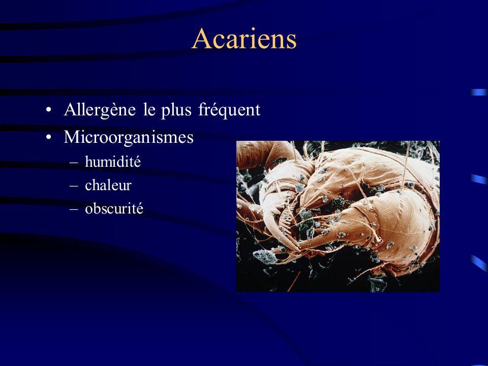 Acariens Allergène le plus fréquent Microorganismes –humidité –chaleur –obscurité