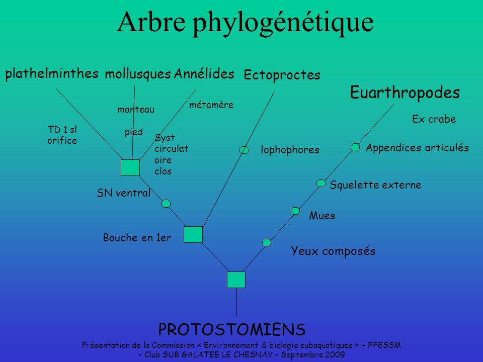 Présentation de la Commission « Environnement & biologie subaquatiques » – FFESSM – Club SUB GALATEE LE CHESNAY – Septembre 2009 Arbre phylogénétique