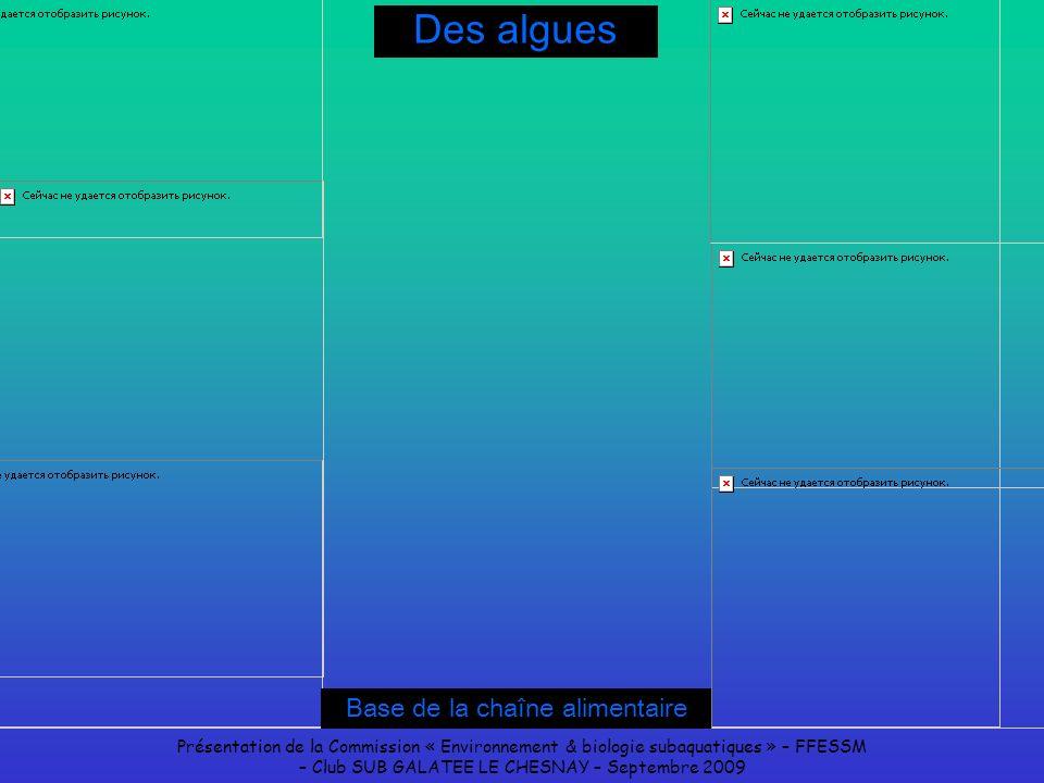 Présentation de la Commission « Environnement & biologie subaquatiques » – FFESSM – Club SUB GALATEE LE CHESNAY – Septembre 2009 Des algues Base de la