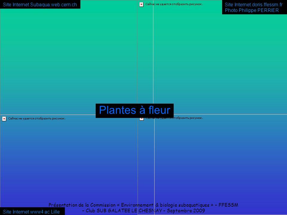 Présentation de la Commission « Environnement & biologie subaquatiques » – FFESSM – Club SUB GALATEE LE CHESNAY – Septembre 2009 Site Internet www4 ac