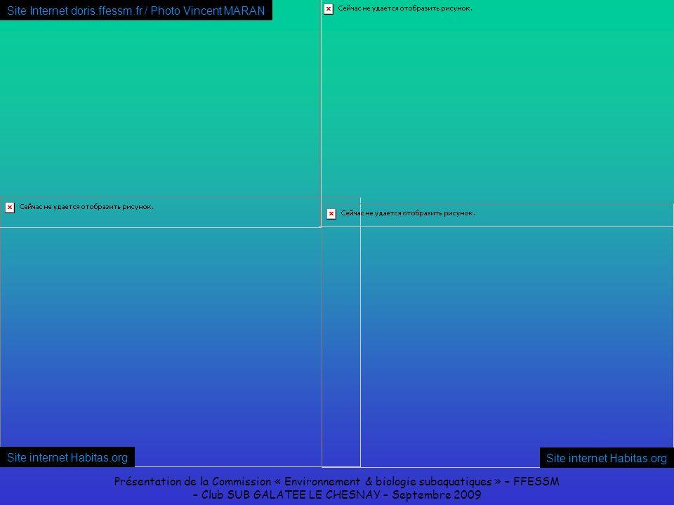Présentation de la Commission « Environnement & biologie subaquatiques » – FFESSM – Club SUB GALATEE LE CHESNAY – Septembre 2009 Site internet Habitas