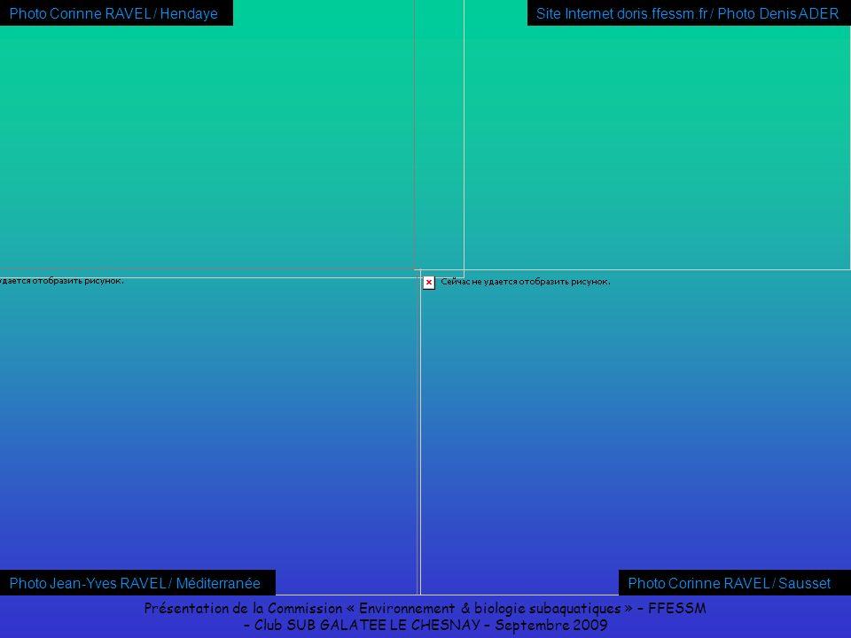 Présentation de la Commission « Environnement & biologie subaquatiques » – FFESSM – Club SUB GALATEE LE CHESNAY – Septembre 2009 Photo Jean-Yves RAVEL