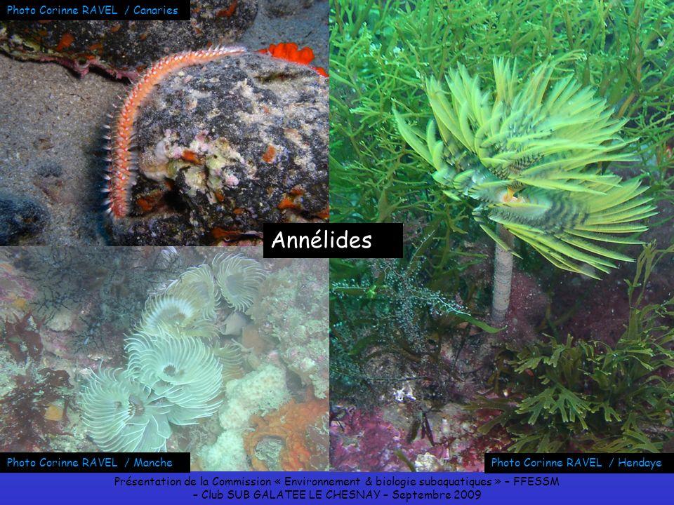 Présentation de la Commission « Environnement & biologie subaquatiques » – FFESSM – Club SUB GALATEE LE CHESNAY – Septembre 2009 Photo Corinne RAVEL /