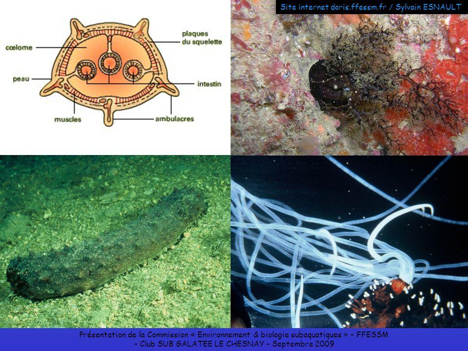 Présentation de la Commission « Environnement & biologie subaquatiques » – FFESSM – Club SUB GALATEE LE CHESNAY – Septembre 2009 Site internet doris.f