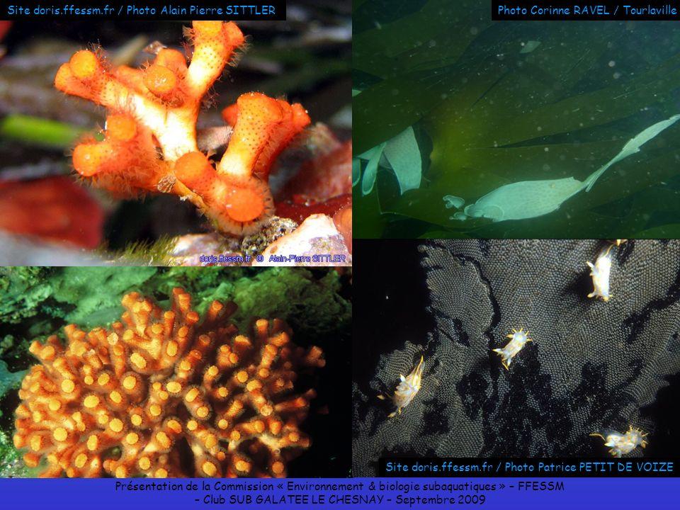 Présentation de la Commission « Environnement & biologie subaquatiques » – FFESSM – Club SUB GALATEE LE CHESNAY – Septembre 2009 Site doris.ffessm.fr