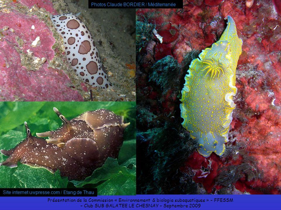 Présentation de la Commission « Environnement & biologie subaquatiques » – FFESSM – Club SUB GALATEE LE CHESNAY – Septembre 2009 Site internet uwpress