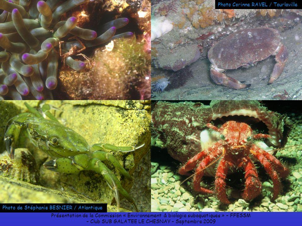 Présentation de la Commission « Environnement & biologie subaquatiques » – FFESSM – Club SUB GALATEE LE CHESNAY – Septembre 2009 Photo de Stéphanie BE