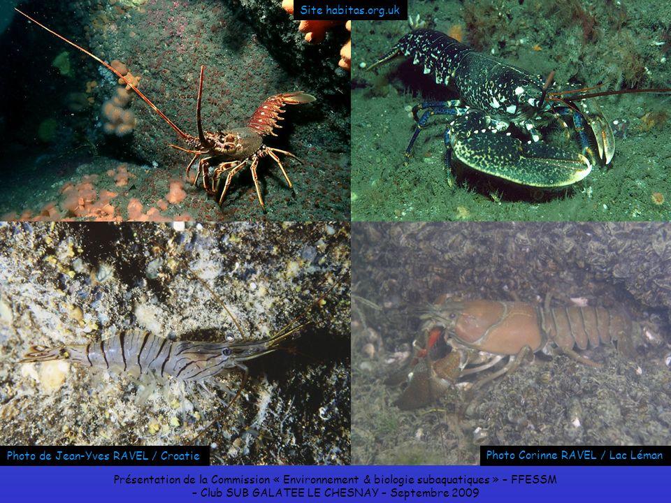 Présentation de la Commission « Environnement & biologie subaquatiques » – FFESSM – Club SUB GALATEE LE CHESNAY – Septembre 2009 Site habitas.org.uk P
