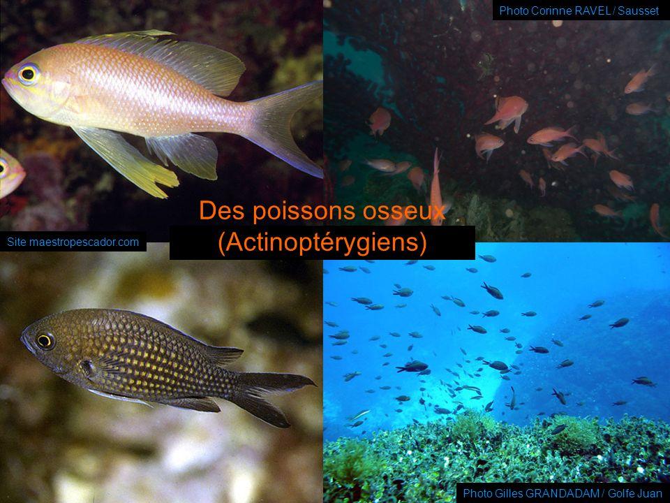 Présentation de la Commission « Environnement & biologie subaquatiques » – FFESSM – Club SUB GALATEE LE CHESNAY – Septembre 2009 Photo Gilles GRANDADA