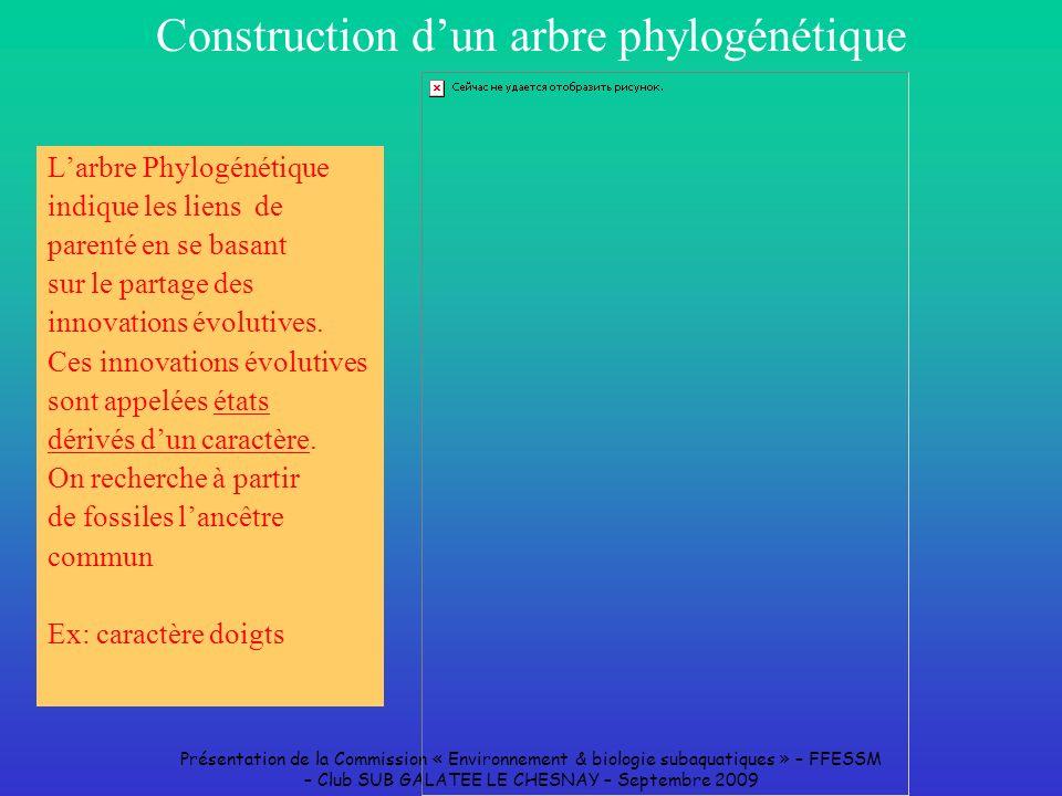 Présentation de la Commission « Environnement & biologie subaquatiques » – FFESSM – Club SUB GALATEE LE CHESNAY – Septembre 2009 Construction dun arbr
