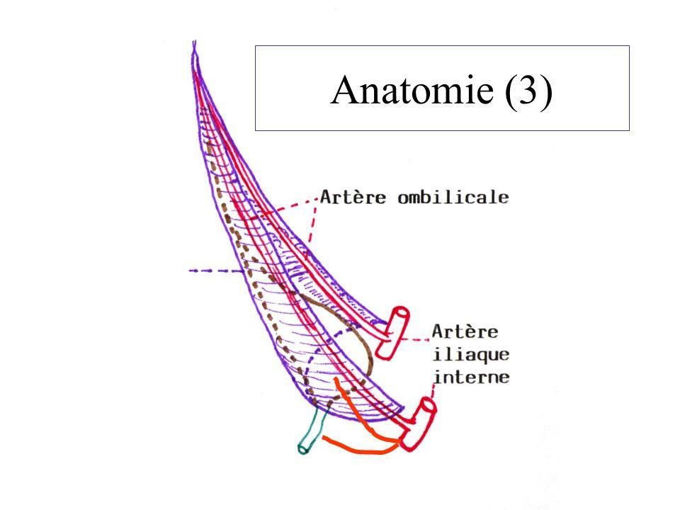 Anatomie (3)
