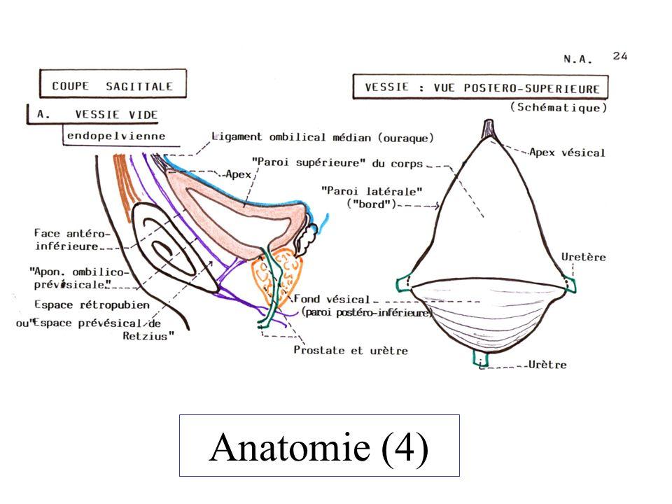 Interventions Cancer : Cystectomie (totale) –Cystoprostatectomie –Pelvectomie antérieure Taille vésicale pour calcul Cure de diverticule vésical