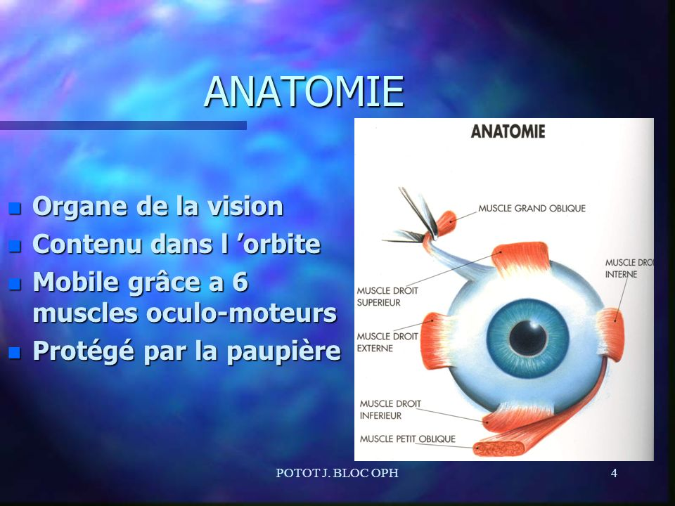 POTOT J. BLOC OPH4 ANATOMIE n Organe de la vision n Contenu dans l orbite n Mobile grâce a 6 muscles oculo-moteurs n Protégé par la paupière