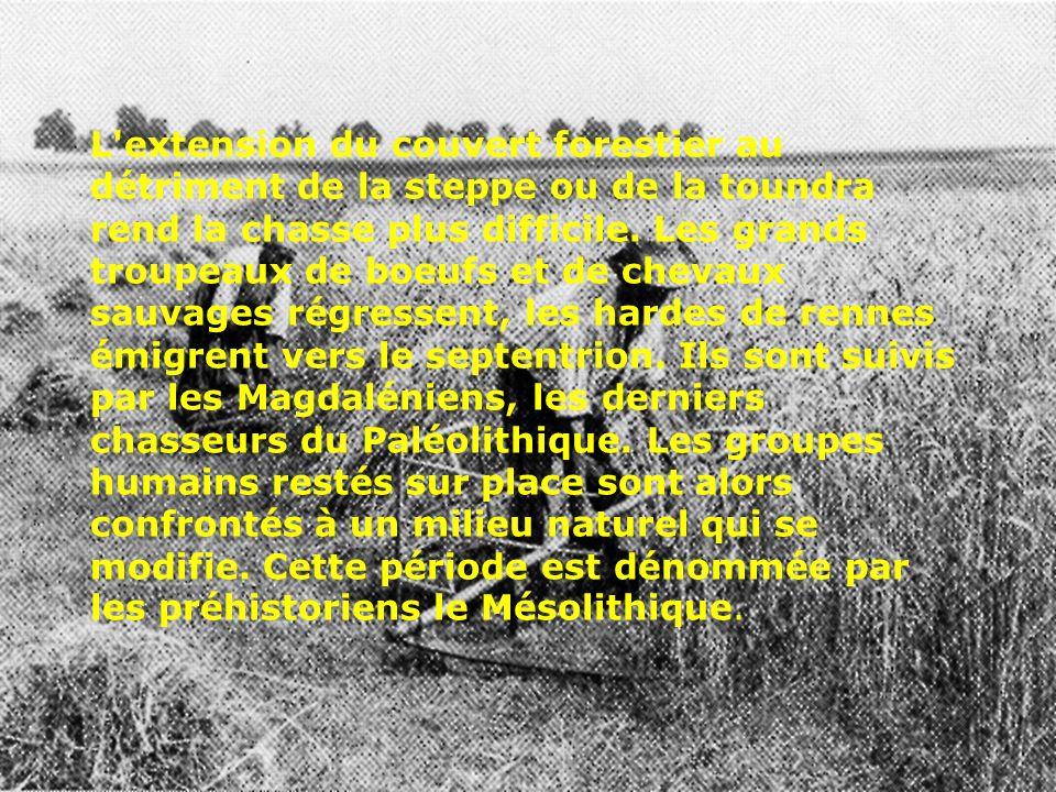 Nord par une population très organisée construisant les fameuses maisons danubiennes de plusieurs dizaines de mètres de longueur, faites de poteaux en bois, de torchis et de chaume, possédant un outillage agricole primitif encore utilisé de nos jours en Papouasie (bâton à fouir le sol, houe, maillet à écraser les mottes, faucille à lame de silex) et pratiquant l élevage du bouf et aussi de la chèvre et du porc