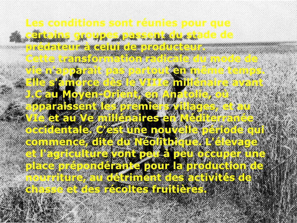 Les conditions sont réunies pour que certains groupes passent du stade de prédateur à celui de producteur. Cette transformation radicale du mode de vi